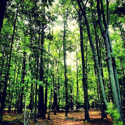 Pathway Photograph - #inthewoods #trees #trail #pathway by Marian  Alleva