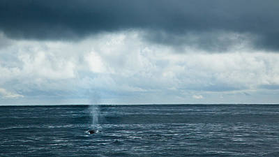Into The Pacific - Fin Whale Original by Adam Pender