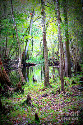 Cypress Knees Photograph - Into The Swamp by Carol Groenen