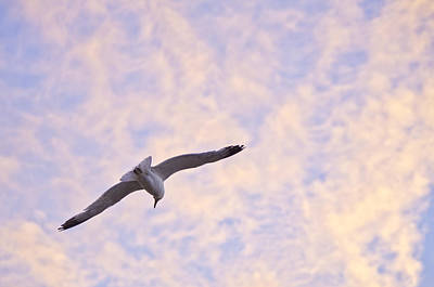 Alviso Photograph - Into The Wind by Priya Ghose