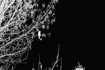 Wall Art - Digital Art - Inverted Bird by Bill Kennedy