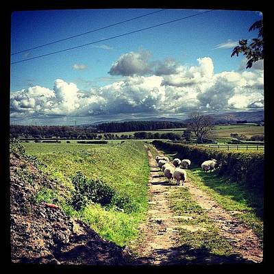 Sheep Photograph - #invitingroads #sheep #ewe #lamb #wool by Miss Wilkinson