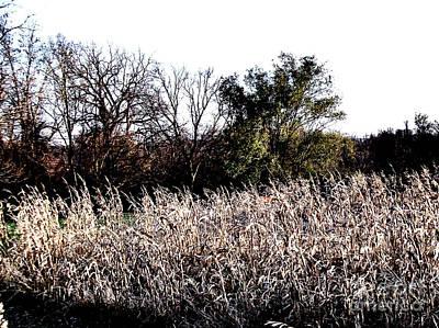 Cornfield Photograph - Iowa Cornfield by Marsha Heiken
