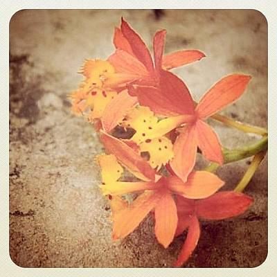 Orchids Photograph - #iphonesia #iphoneography #flower by Sherri Galvan