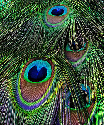 Iridescent Eyes Art Print
