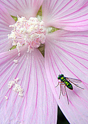 Photograph - Iridescent Fly  by Mark J Seefeldt