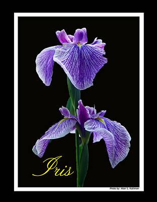 Photograph - Iris by Allan Rothman
