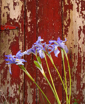 Photograph - Iris And Red Door by Joe  Palermo