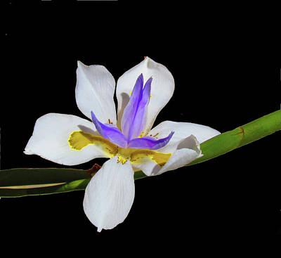 Photograph - Iris by Bonnie Muir