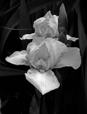 Art Print featuring the photograph Iris by David Pantuso