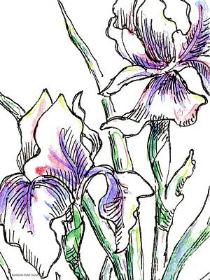 Painting - Iris Drawing 2 by Gordon Punt