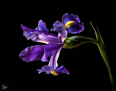 Photograph - Iris by Endre Balogh