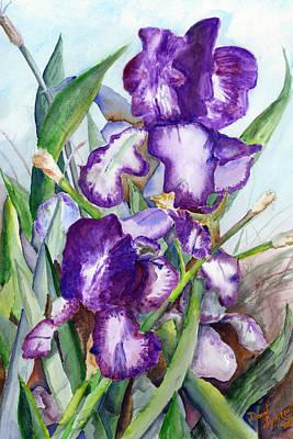 Iris Eyes Art Print by David Ignaszewski