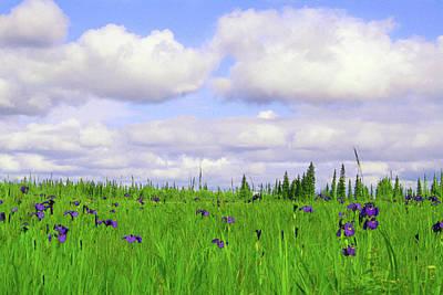 Impressionist Landscapes - Iris Field by Rosanne Nitti