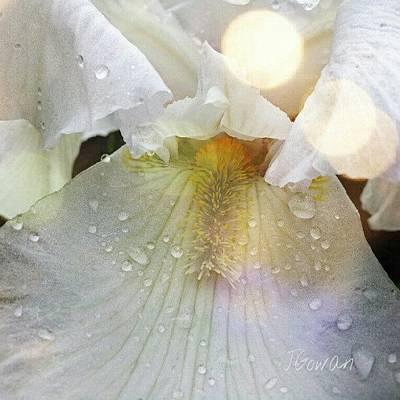 #iris #flower #whiteflowers #white Art Print