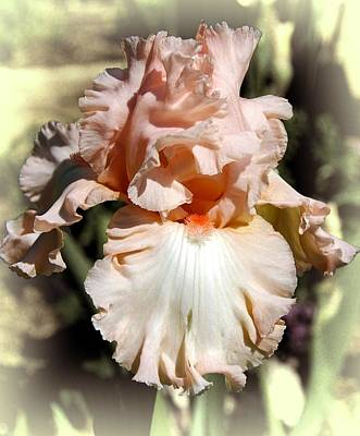 Photograph - Iris by Fran Woods