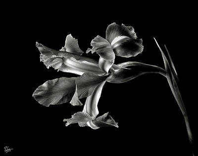 Photograph - Iris In Black And White by Endre Balogh
