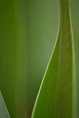 Photograph - Iris In Green by JD Grimes