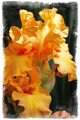 Photograph - Iris by Judy Deist