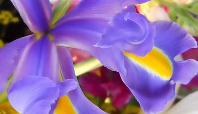 Photograph - Iris Macro by Lynnette Johns