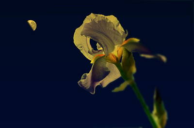Flower Photograph - Iris Moon by Emily Stauring