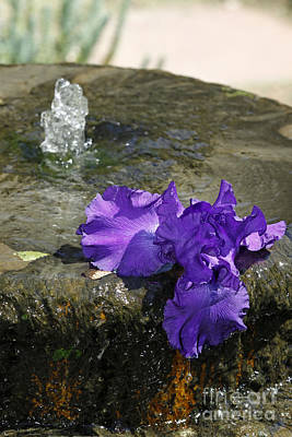 Photograph - Iris On Fountain by Shawn Naranjo