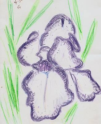 Drawing - Iris Outlined by Carolyn Donnell