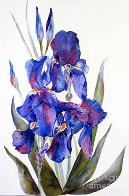 Painting - Iris by Sibby S