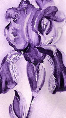 Iris Study In Purple Art Print