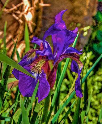 Photograph - Iris by Tom Culver