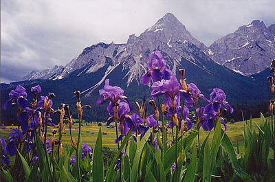 Photograph - Irises In Austria by Pat Moore