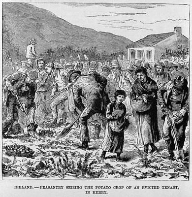 Irish Peasants Seizing The Potato Crop Art Print