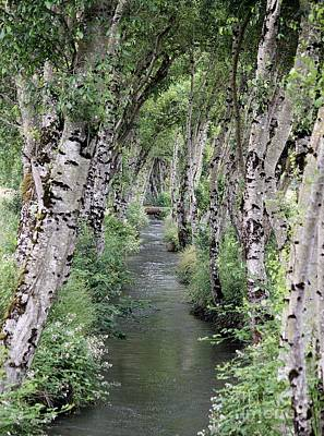 Photograph - Irrigation Creek Downstream by Erica Hanel