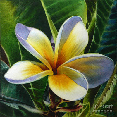 Painting - Island Beauty - White Plumeria by Arena Shawn
