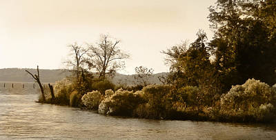 Photograph - Island Trees by Marilyn Marchant