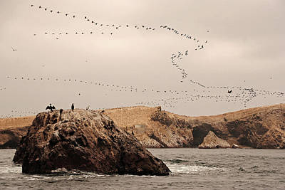 Flock Of Bird Photograph - Islas Ballestas - Peru by Andrea Cavallini