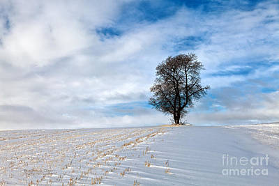 Isolation Art Print by Beve Brown-Clark Photography