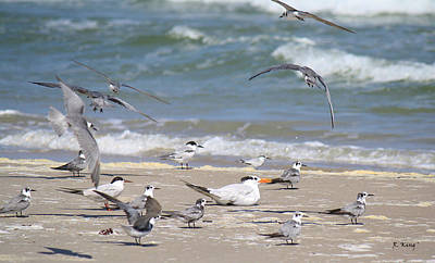 Photograph - It Is My Tern Yet by Roena King