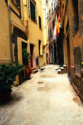 Italian Alley Kitty Art Print by Virginia Furness