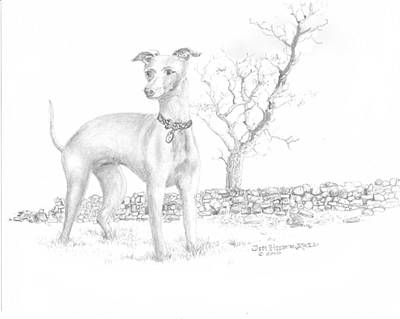 Art Print featuring the drawing Italian Greyhound by Jim Hubbard