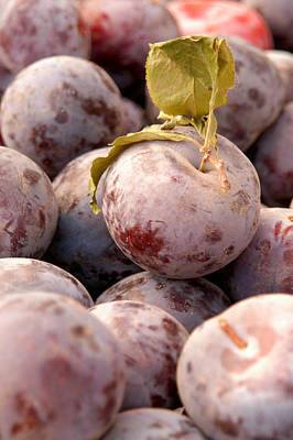 Organic Photograph - Italian Plums At Market by Lanjee Chee