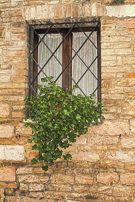 Photograph - Italian Window With Ivy And Bars by Michael Flood