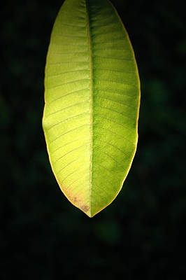 Photograph - It's A Leaf by David Weeks