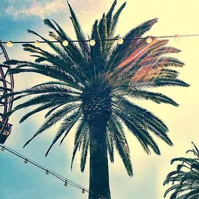 Iphone Photograph - It's A Palm Tree. #la #losangelas by Johnathan Dahl