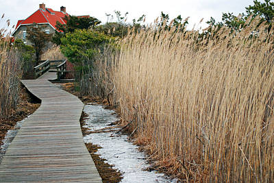 Photograph - Its Lonely On Fire Island In Winter by Harvey Barrison