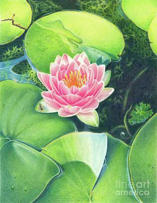 Waterlily Drawing - Its Pink by Elizabeth Dobbs