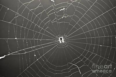 Photograph - Itsy Bitsy Spider by Leslie Leda