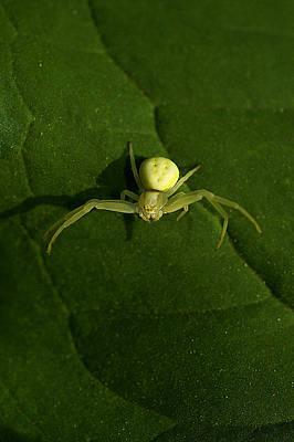 Bitsy Photograph - Itsy Bitsy Spider by Rianna Stackhouse