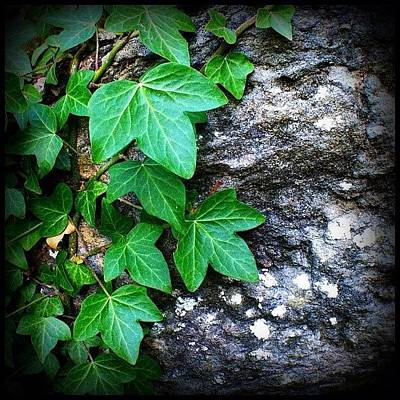 Plant Wall Art - Photograph - Iv by Mark B