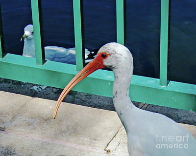 Photograph - Ivis Ibis And Packy by Lizi Beard-Ward